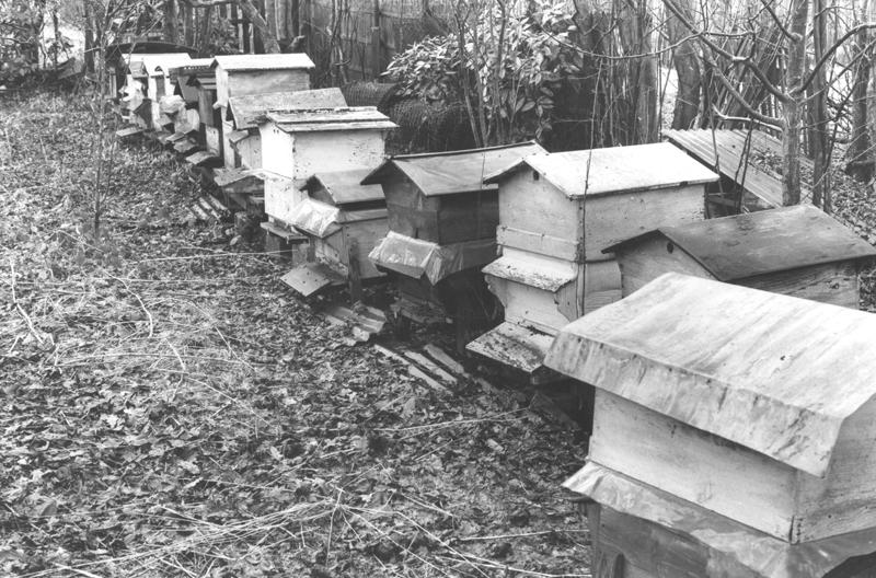 apiculteur val d'oise