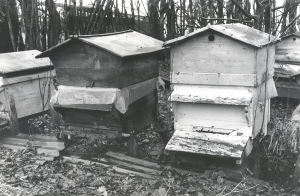 Histoire de l'apiculture en Pays de France et dans le Val d'Oise