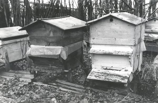 apiculteur oise